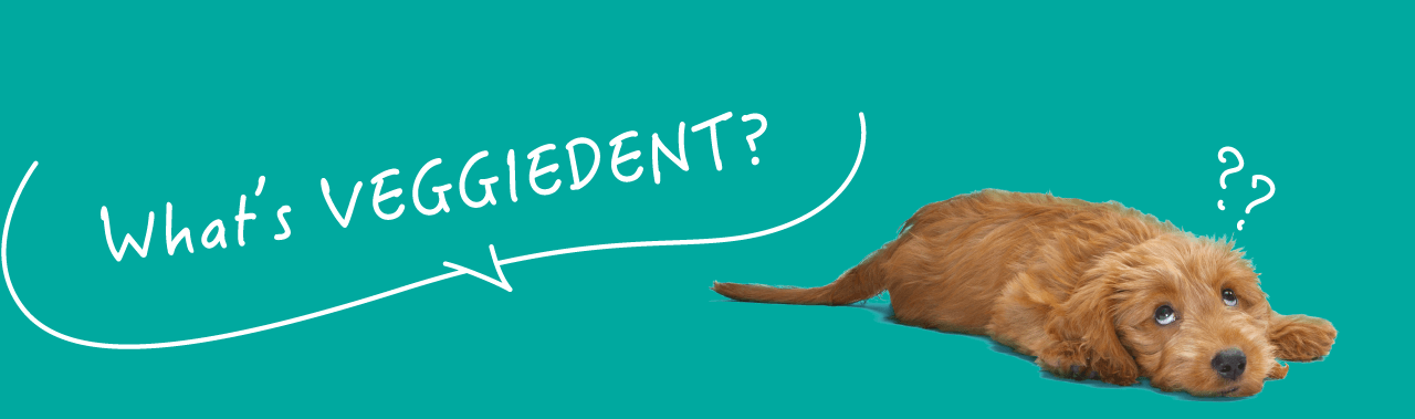 What's VEGGIEDENT?